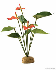 Exo Terra Rainforest Ground Plants Anthurium Bush