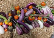 EGGPLANT 'Heirloom Mix' 35+ seeds UNUSUAL vegetable garden HOT CLIMATES Spring