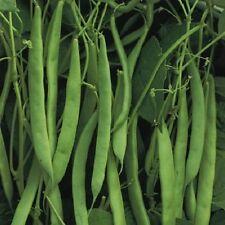 French Bean Dwarf The Prince Phaseolus vulgaris 100seed