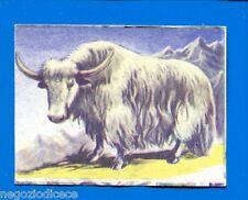 ANIMALI - Lampo 1964 - Figurina-Sticker n. 141 - YAK -New