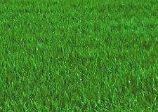 Kein Moosvernichter !! Der Moosverdränger Rasendünger für 250 m²  Rasen Dünger