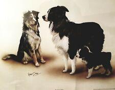 Border Collie Dog Vintage Print by Robert J. May 16.5 X 23