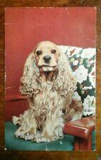 Vintage Postcard 858 COCKER SPANIEL, Alfred Mainzer 3.5x5.5 Unposted