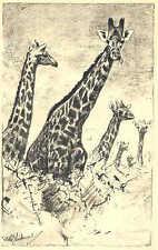 Wilhelm Kuhnert - Afrika - Griaffen