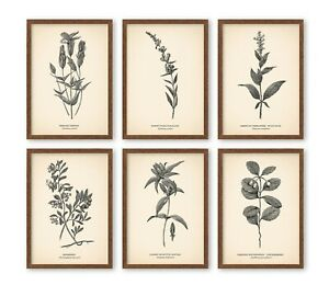 5x7'' VINTAGE STYLE PRINTS Botanical Poster Neutral Home Decor - FIT IKEA FRAMES