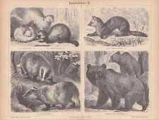 Frettchen Iltis Zobel Dachs HOLZSTICH von 1878 Bär Raubtiere