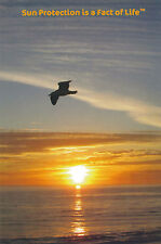 Postcard SUN PROTECTION IS A FACT OF LIFE™ Bird Flying at Sunset Photo Post Card