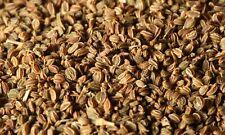 100% Celery Seed Essential Oil - Apium graveolens Artisanal Natural Oil Grade A1