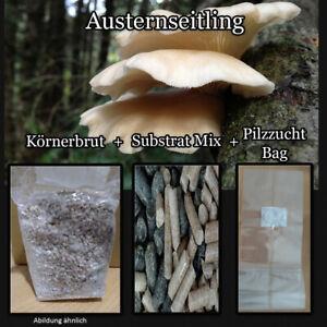 Austernseitling ,Körnerbrut,Myzel,Substrat,Austernpilz, Startset,Pilze Züchten