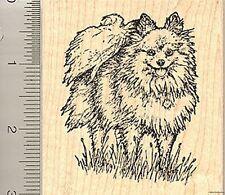Pomeranian Rubber Stamp, Toy Dog, Pom L50316 WM