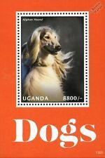 Pets & Farm Animals