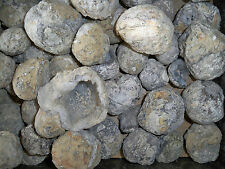 "#1, ""WHOLESALE PRICE"" 8 POUND BAG OF TRANCA GEODES WITH CRYSTAL CENTERS"