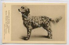 (Ld6513-471)  Dog, Laverack Setter, #B73  Unused G-VG