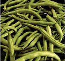 BEAN SEED, COMMODORE BUSH, HEIRLOOM, ORGANIC 20+ SEEDS, NON GMO, GREEN BEANS