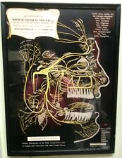 VINTAGE FRAMED NOVOCOL DENTAL HUMAN CRANIAL NERVE  ADVERTISING DISPLAY POSTER
