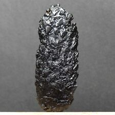 ME361- RARE 3D MIOCENE FOSSIL CONE FROM POLAND - Picea sp.