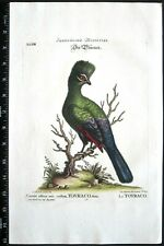 Edwards/Seligmann,Touraco,Cuculo affinis,avis cristata,handc.engr.c,1749#13