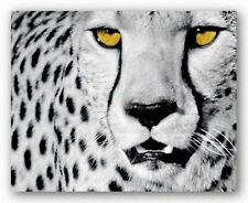 White Cheetah Rocco Sette Wildlife Art Print 15.75x19.75