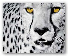 White Cheetah Rocco Sette Wildlife Art Print 15.75x19.75