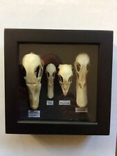 More details for bird skull collection. taxidermy, natural history collectibles, home decor.
