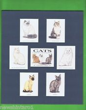 SEVEN MOUNTED CAT  CARDS