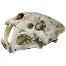 1:1 Saber-Toothed Tiger Resin Replica Skull Head Model Home Bar Decor Halloween