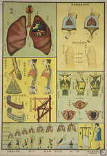Framed Vintage Chinese Medical Print – Respiratory System (Picture Anatomy Art)