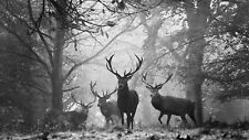 Black And White Deers Canvas Wall Art 20X30 INCHES