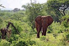 "Fotoleinwand ""Kenya Wildlife - Elefant"" 20 x 30 cm (weitere Formate)"