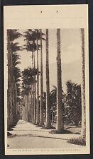 BRAZIL 50 -RIO DE JANEIRO, Jardim Botanico - Allea central com o chafariz