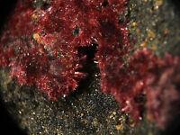 Erythrite Crystals. Mt Cobalt, Queensland, Australia (EA6148)
