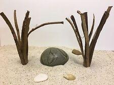 d'Amande de écorce de BADAMIER (décoration + Santé + cachette) catappa feuilles