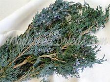 BLUEBERRY JUNIPER - FRAGRANT! natural preserved Christmas evergreen cedar pine