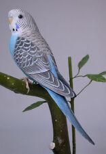 Budgerigar Original Bird Wood Carving/Birdhug