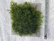 Mini pellia moss Pad /Aquarium Live Plants (Last One) 3 x 3 inches