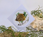 p74 (CA) Taxidermy Oddities Curiosity Butterfly fish Floating frame collectible