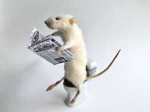 Taxidermy Mouse Reading On The Loo - Made To Order