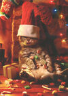 Cat with Stocking on Head Funny Humorous Christmas Card by Avanti Press photo