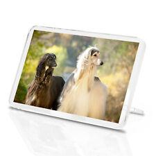 Beautiful Afghan Hounds Classic Fridge Magnet - Canine Dog Animals Gift #16056
