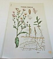 Vintage MN Department of Agriculture, Dairy & Food Weed & Seed Division Pamphlet