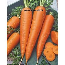 Carrot St Valery Rich Sweet High In Vitamin A+C COMBINED SHIPPING ORGANIC SEEDS