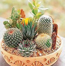 New listing 100 Pcs Cactus Seeds Mix Organic Ornamental Seed Rare succulents