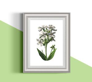 Botanical pink flower 02 illustration 13x18 cm premium quality glossy print