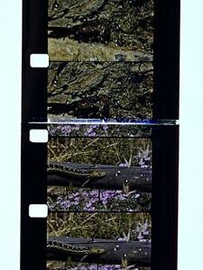 "Muscle Beach California 16mm Home Movie Film 7"" Wildlife Incl. Snakes Fish Birds"