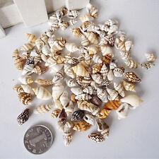 50g Mixed Natural Shells Crafts Fish Tank Aquarium Conch Ornament Diy Decor Gift