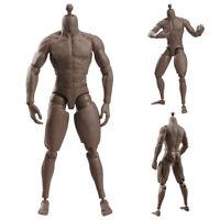 1/6 Muscular Male Figure Body V1-M Model Fit TTM19 Hot Toys Phicen Sculpt Head