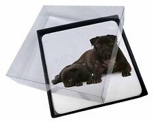 4x Carlino perro cachorro Imagen MESA Posavasos Juego En Caja de regalo, ad-p91c