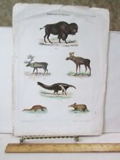 Vintage Print,Mammals,19th Century,Hand Color,French-