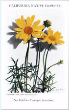 CALIFORNIA NATIVE FLOWERS Series 1934 Lena Scott Harris -Postcard-SEA DAHLIA