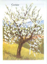 IMAGE CARD 60s Arbre fruitier Trees Cherry Cerisier Prunus Rosaceae